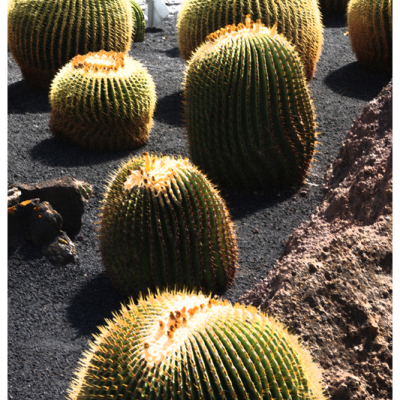 Bike excursions and hiking jardin de cactus lanzarote